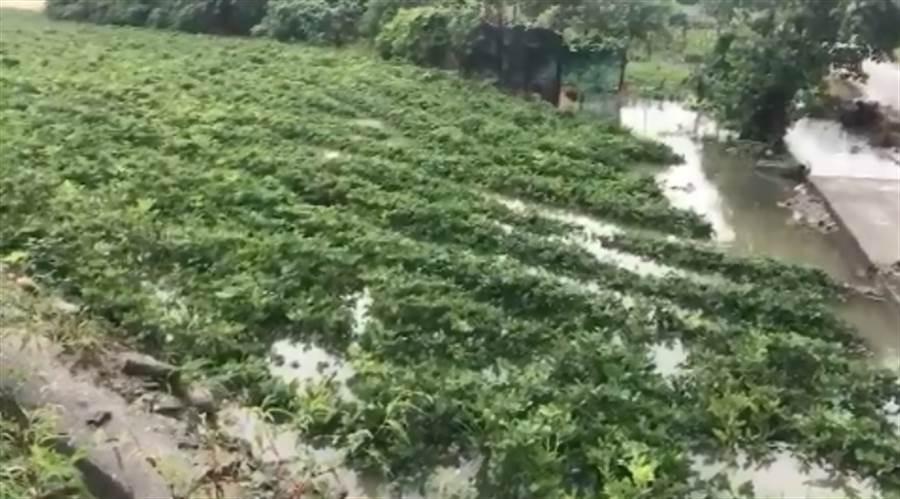 中南部產地泡水 葉菜類皆漲十元
