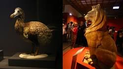 考古學家都感嘆!「大英自然史博物館展」必看展品在這裡!