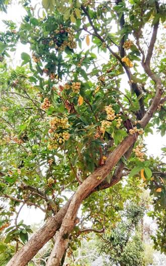 花博后里森林園區原始林相完整保留 奇樹異果處處可見