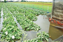 彰化花椰菜農損 可速報速核