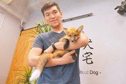 萌寵狐狸 一點都不狡猾