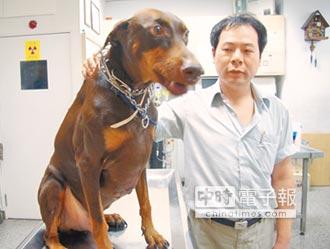 杜賓狗報恩 變身熱血救命犬