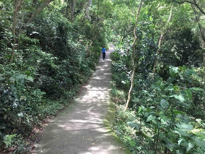 田中森林公園步道傳出有野生水鹿蹤影,還有山友遭到猛烈攻擊。(謝瓊雲翻攝)
