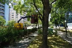 強颱來襲 北市修剪行道樹、機動管制疏散門