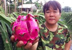 連日豪大雨 屏東瓜果類農損嚴重