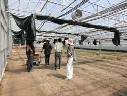 高雄農業局助農民搭建抗颱溫室