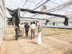 高市助農民搭建抗颱溫室
