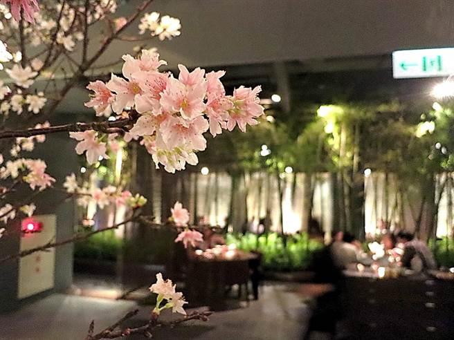 為營造用餐氛圍,「新都里」瀧四店會按四時變化在店內以真的櫻花樹或孟宗竹布置。(攝影/姚舜)
