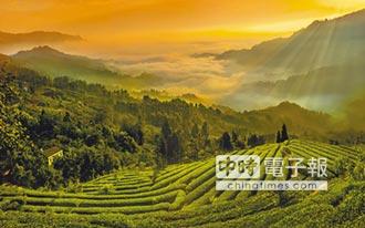 佛教名山 峨眉山茶香飄世界