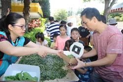 4新品種蠶寶寶亮相 苗栗農改場上演拉蠶絲被秀