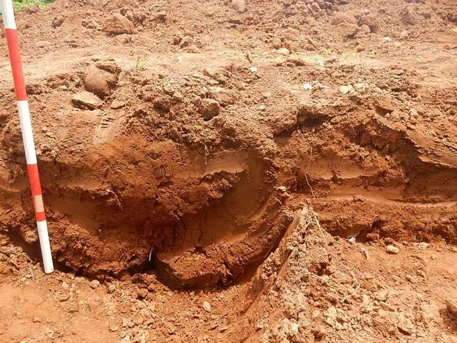 嘉義農試所果園下挖淺層即發現疑似有山仔頂遺址。(廖素慧翻攝)