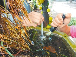 台南1⁄5積水容器 孳生病媒蚊