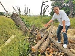 議員質疑砍樹 市府指枯木移除
