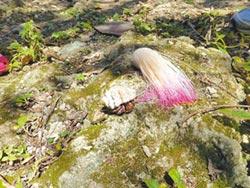 墾丁生態遊 把貝殼還給大海