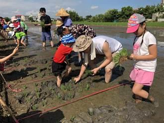竹南親子插秧 體驗傳承農務文化