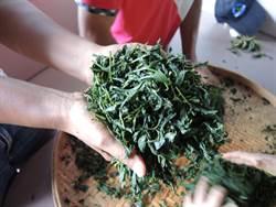 鍊茶師大解密  茶博館「大鍊茶師製茶體驗營」