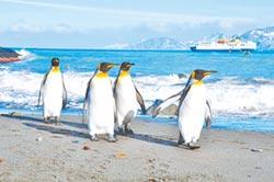 南極旅遊熱 不利生態干擾科考