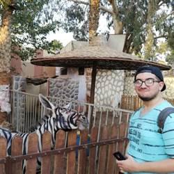 天氣熱到斑馬紋路糊掉!動物園園長堅持:牠是斑馬
