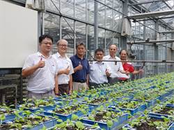 智慧化新型栽培溫室  台南農改場展出