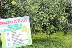 台南市文旦大賽開跑 第一階段果園評鑑篩選60名晉級