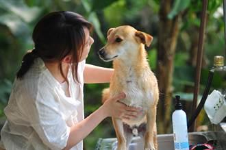 慎選寵物專用洗毛精 大熱天別讓毛小孩飄異味
