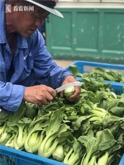 高溫影響出苗率 滬上綠葉菜田頭收購價普漲一倍