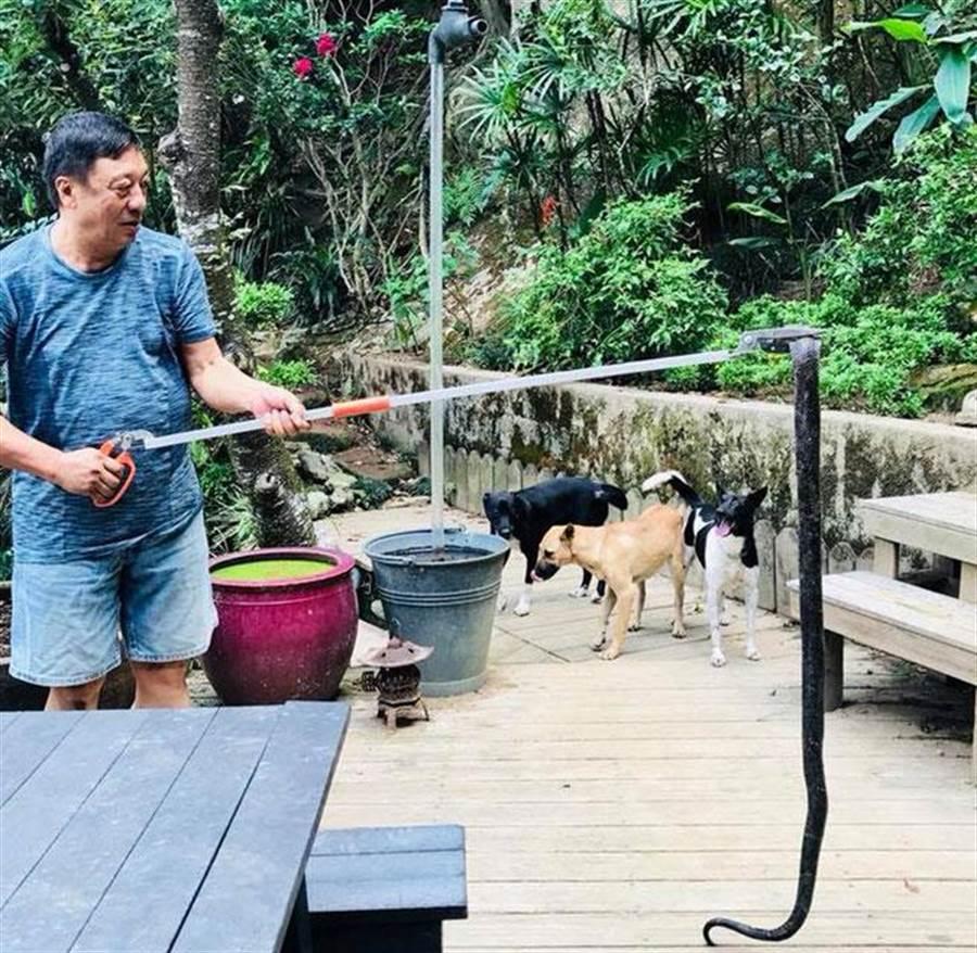 軍事專家李天鐸日前與太太在山區散步時,突然驚見一條超過175公分長的眼鏡蛇,嚇壞了身旁的太太。(圖擷自李天鐸軍事論壇臉書)