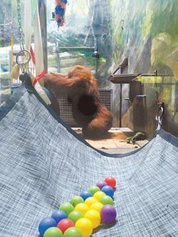 豐富動物生活 籠舍堆進生活垃圾