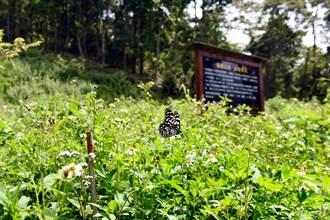 日月光造林見成果 可望開放養蜂採蜜