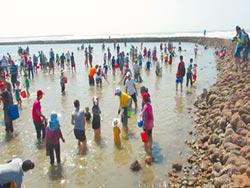 後龍石滬文化節 體驗捕魚趣
