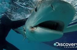 NBA「大鯊魚」尬鯊魚! 歐尼爾入海親密共游