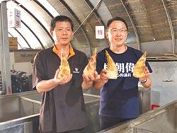 網傳綠竹筍有毒 害慘筍農
