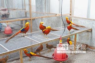玉石專家養小三 打造百鳥園