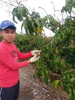 農家子弟錄取國立大學  未來協助家鄉農業企業化