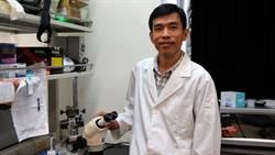 解密「跳躍基因」 陽明腦科所找出大腦發育疾病關鍵基因
