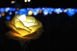 淡水的七夕好好玩!彩色音階燈、夜光玫瑰花海耍浪漫