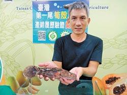 退休師養筍殼魚 獲產銷履歷認證