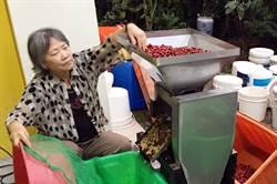 魚池鄉日月潭咖啡獲獎連連 鄉公所將隆重表揚