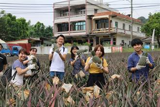 遊高雄大樹採金鑽鳳梨 新加坡遊客興致高
