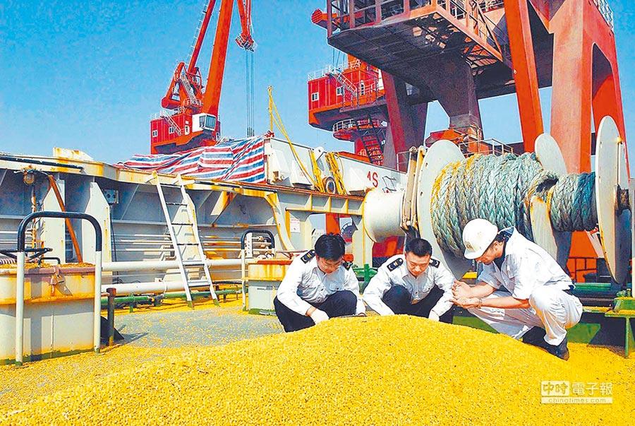 大陸市場需求大,縱有貿易戰仍得買美黃豆。圖為山東檢驗檢疫局抽檢美國大豆。(新華社資料照片)