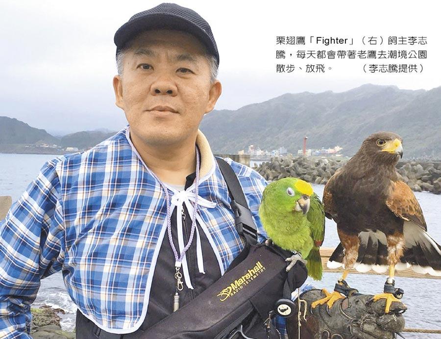 栗翅鷹「Fighter」(右)飼主李志騰,每天都會帶著老鷹去潮境公園散步、放飛。(李志騰提供)