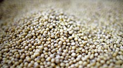 陸大豆產需缺口9千多萬噸 急向國際市場調配