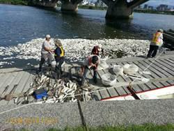 高溫死魚群擴及北市 環保局上午已打撈25噸