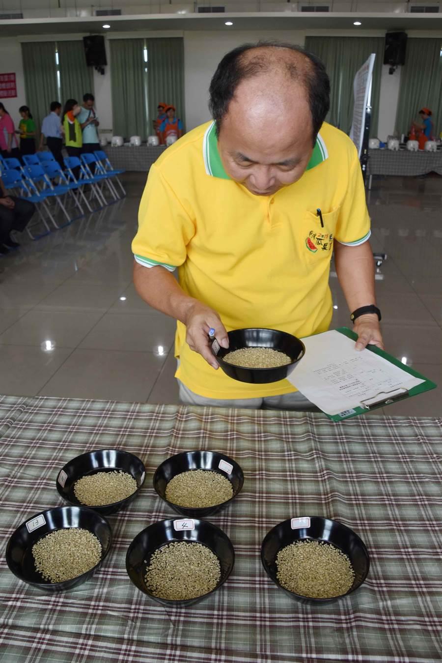 太保市農會14日舉辦稻米品質競賽,評審一一檢視稻米和稻穀外觀的完整性。(呂妍庭攝)