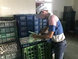 食品行液蛋驗出沙門氏菌 37公斤全被消費者吃下肚