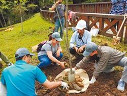 參與式護樹 保育阿里山櫻花