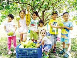 敏通快樂農場 開放預約採柚