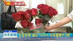 七夕情人節氣氛淡 店家推「巨型玫瑰」吸睛搶客