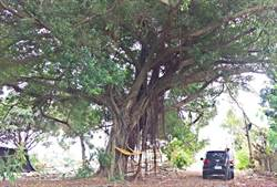 樹根堵塞民宅排水管致淹水 公園處判賠37萬