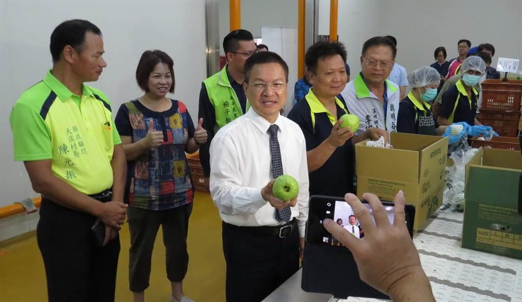 魏明谷參觀青信果菜合作社外銷芭樂的篩選、包裝作業。(鐘武達攝)